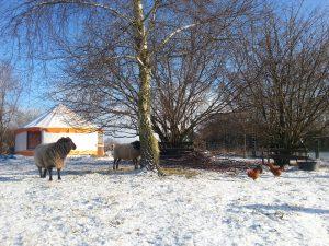 Auenhof Schafweide mit Jurte im Schnee